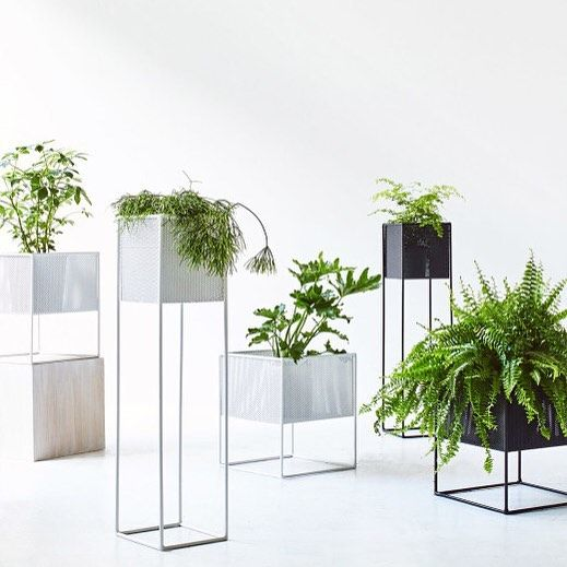 Instagram  todo  Blumentopf Design Wohnzimmerpflanzen i Pflanzenstnder