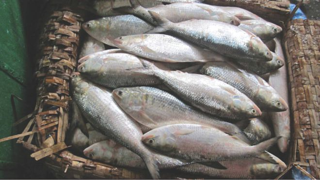 Order Salmon Fish Home Delivery In Mumbai Fresh Meat Seafood Online Salmon Fish
