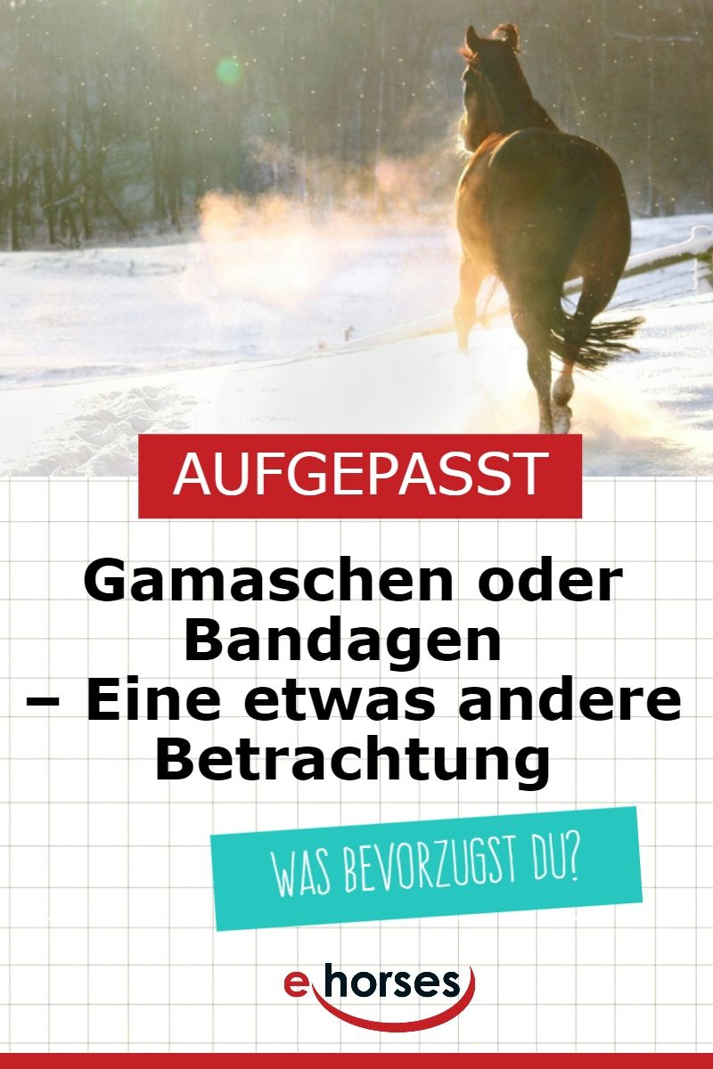 haflinger kaufen ehorses