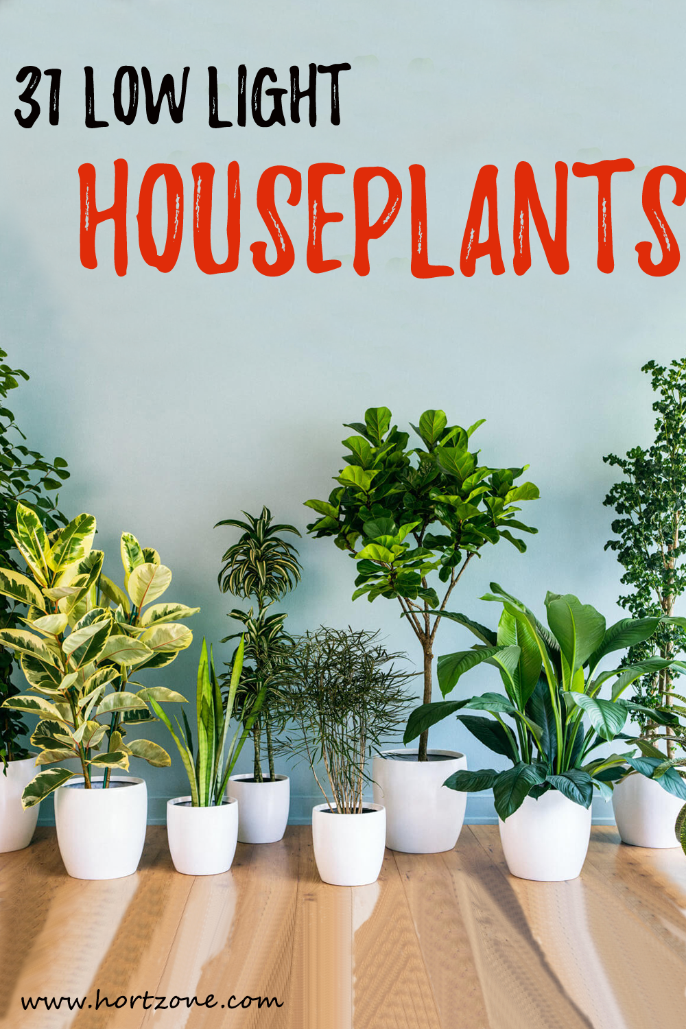 31 Low Light Houseplants For Indoor Garden Houseplants Low Light Low Light House Plants Indoor Plants Low Light