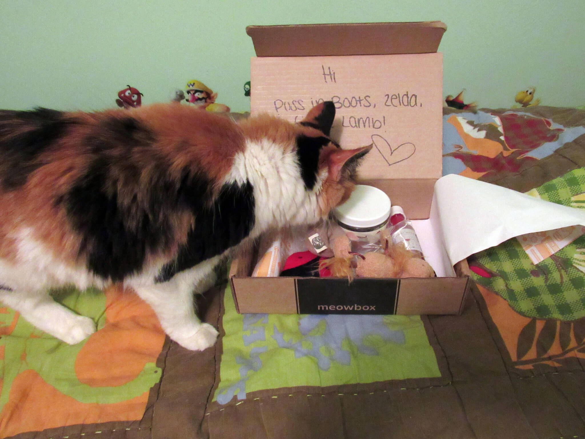 June 2016 Meowbox Subscription Box Review & Coupon - http://hellosubscription.com/2016/07/june-2016-meowbox-subscription-box-review-coupon/ #MeowBox #subscriptionbox