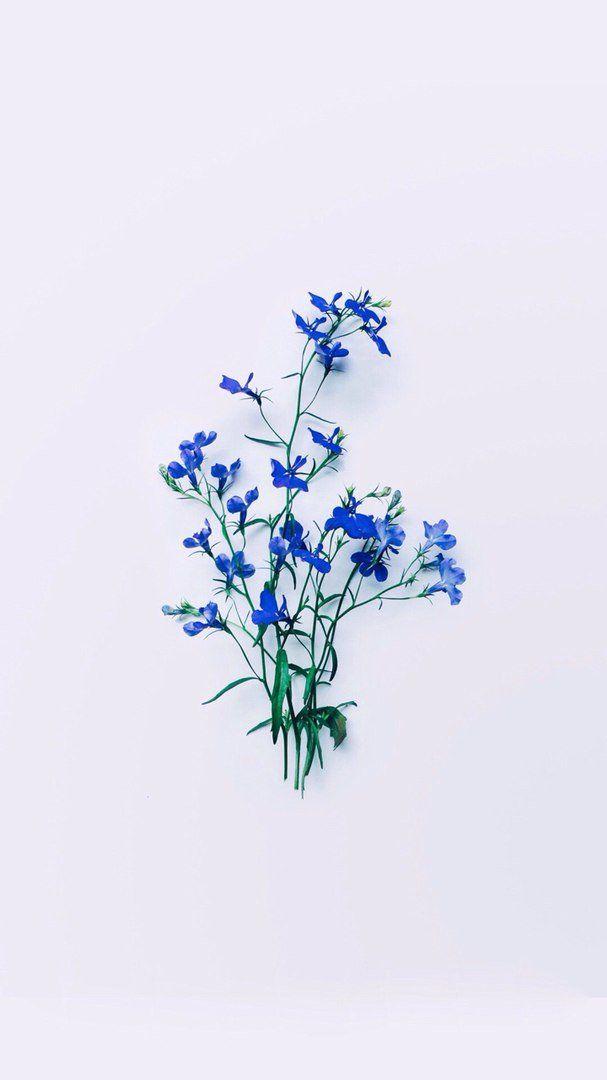 Esthetics Archive On Twitter Blue Flower Wallpaper Ravenclaw Aesthetic Blue Aesthetic Coolest bell flower wallpaper