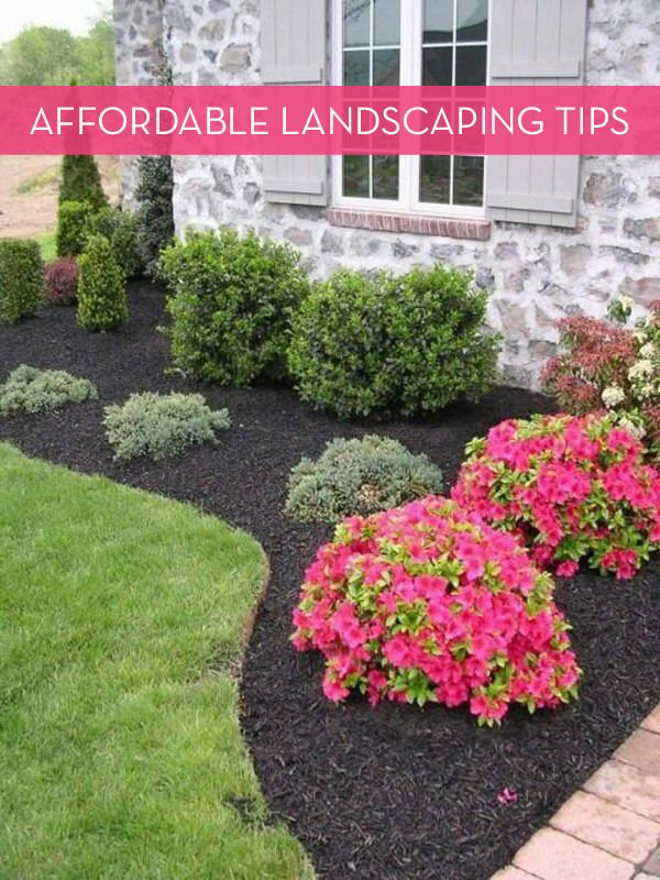 13 tips for landscaping on a budget yards landscaping for Easy care shrubs front house