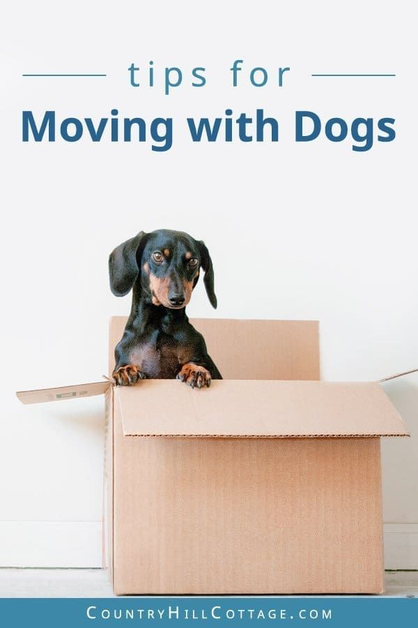 What to do with pets on moving day? Tips & free printable
