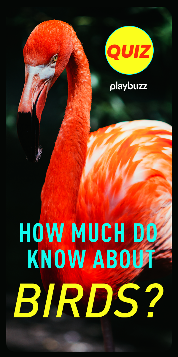 How Much Do You Know About Birds? | Animal Quizzes | Bird