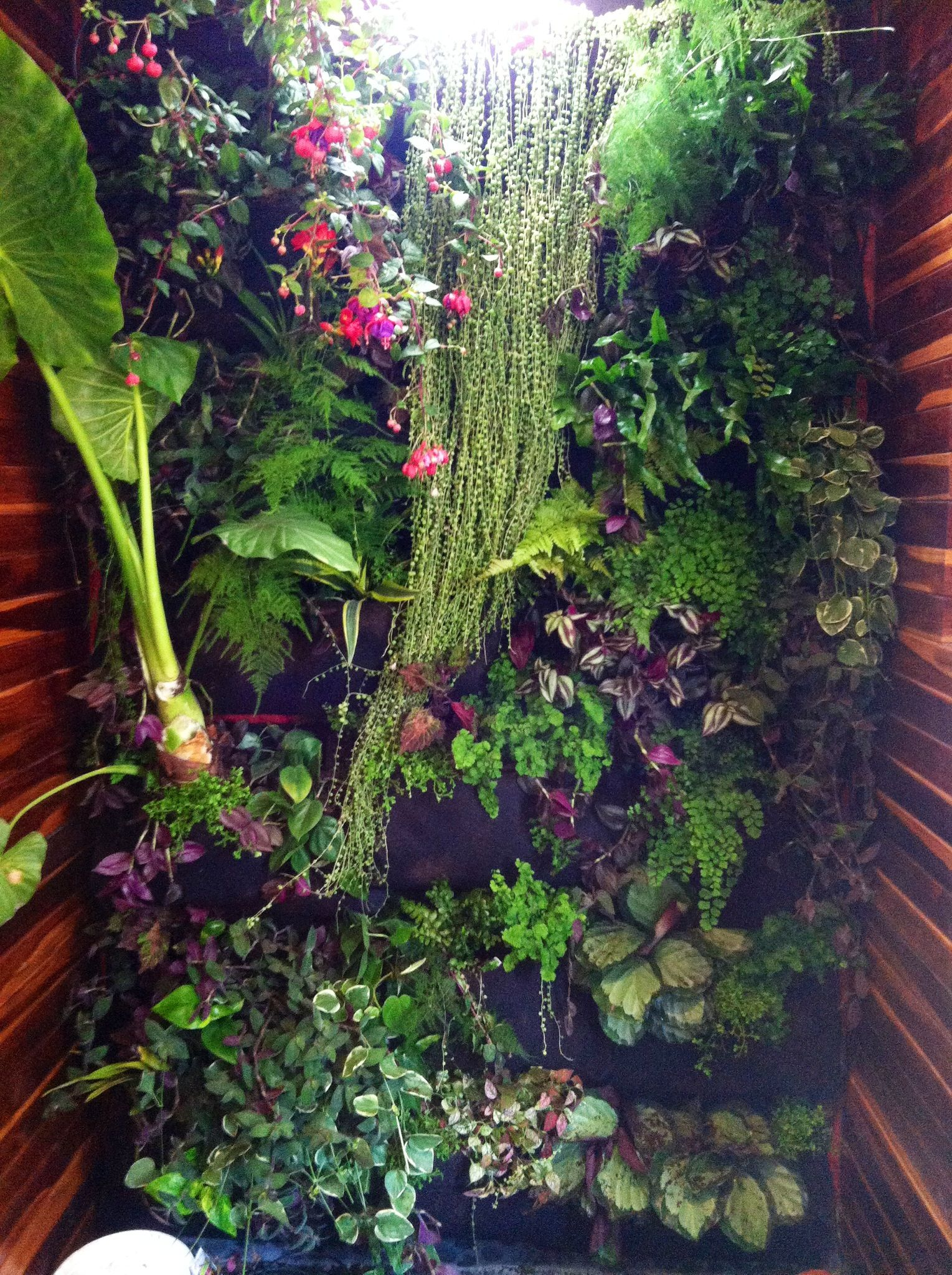 Backyard Shower My Shower Plant Wall Indoor I Used Wallypockets For The