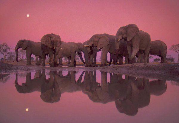 Abestof : photo  Twilight Of The Giant Elephants  https://t.co/ljFxx9fGSj http://rarme.com/?F9gZi
