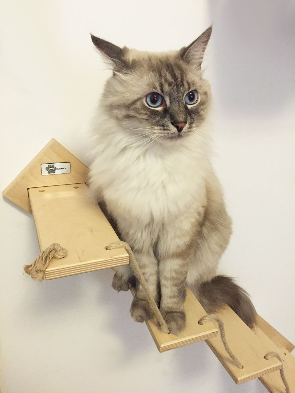 Handmade made in Italy wooden ladder for cats by www.athleticat.it