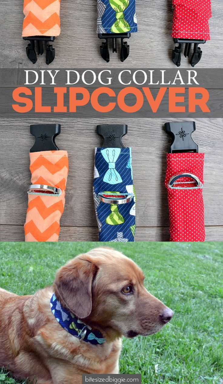 Dog collar slipcover tutorial pet collars fabric scraps and scrap pet collar slipcover tutorial for cats and dogs use fabric scraps to fancy up an old collar and dress them up for special occasions solutioingenieria Images