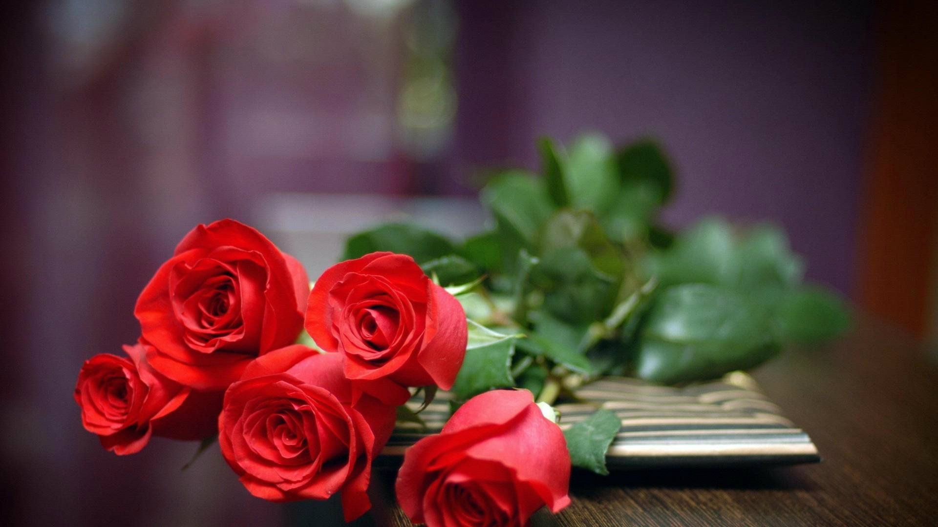 Most beautiful red roses hd wallpapers flowers pictures hd most beautiful red roses hd wallpapers flowers pictures hd izmirmasajfo