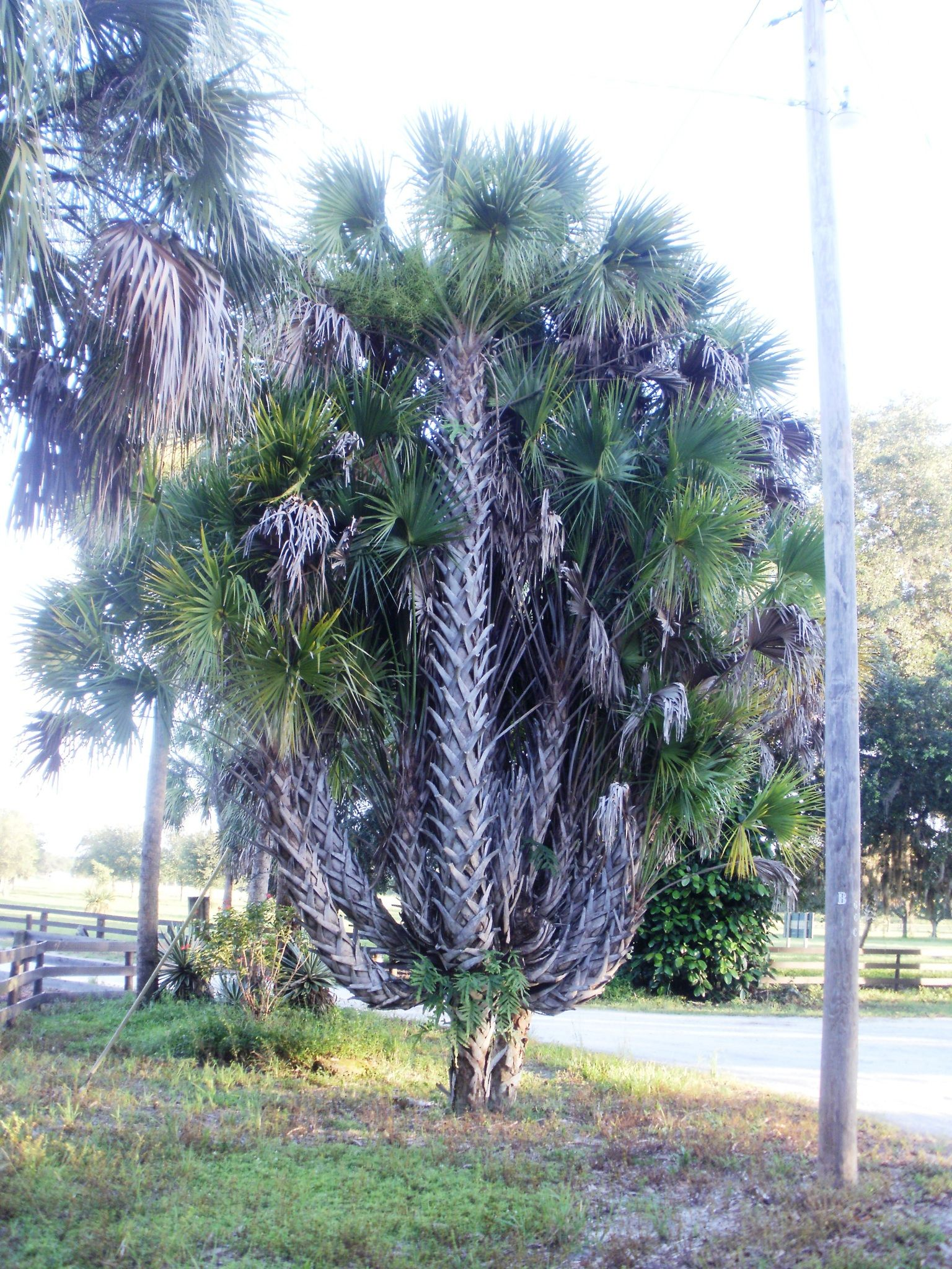Obituary | Kevin Belich of Pensacola, Florida | Harper