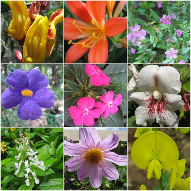 Flowers of Yercaud Botanical Garden Tamil Nadu | Fabulous Flowers