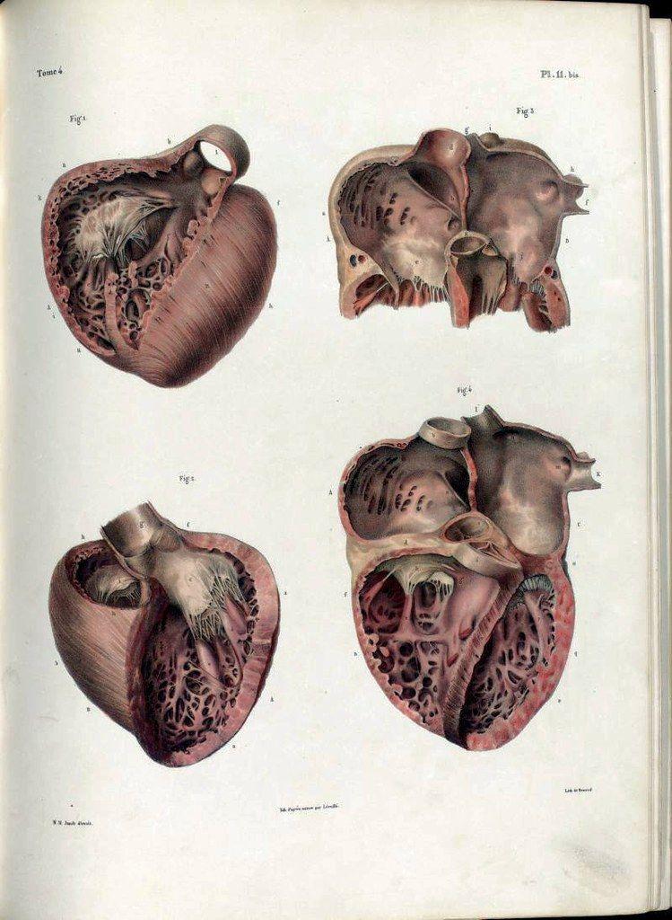 Anatomy Illustrations 1800s