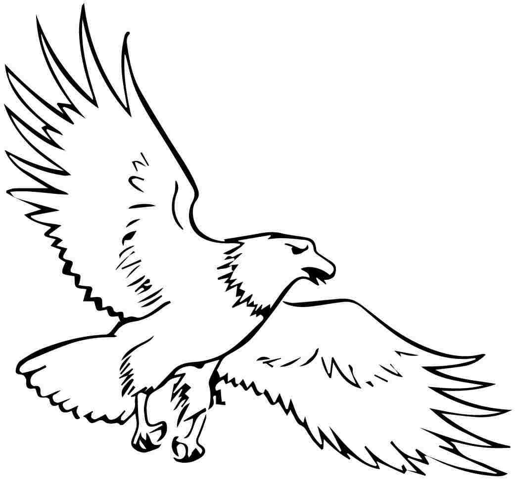 printable animal eagle - Bald Eagle Coloring Pages Kids