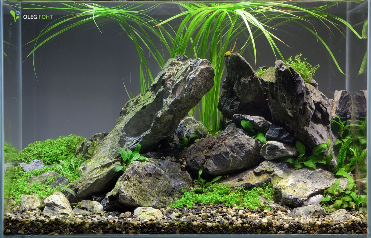 Freshwater aquarium fish nano - Aquarium