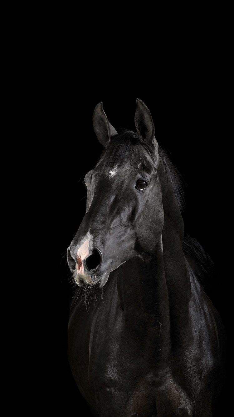 Pin By Pam Harbuck On Iphone Wallpaper Horses Horse Wallpaper Black Horse