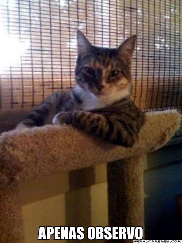 APENAS OBSERVO - O gato mais interessante do mundo   Gerador Memes