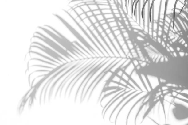 Shadows Palm Leaves On A White Wall Shadow Painting Shadow Photography Abstract