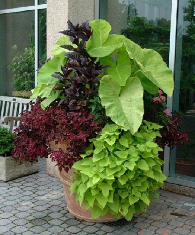 Ideas para crear bonitas composiciones en maceta blog for Varias plantas en una maceta