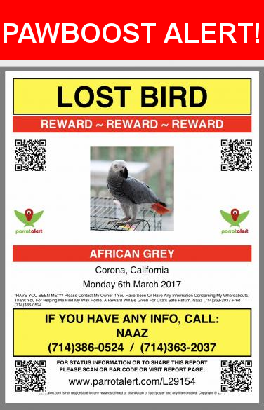 Please spread the word! Cita was last seen in Corona, CA 92883.  Message from Owner:          💔💔💔💔  LOST BIRD  💔💔💔💔                    💰REWARD💰REWARD💰    BREED: AFRICAN GREY CANGO  COLOR: GREY WITH A RED TAIL     PLEASE LOOK IN THE BACKYARD TREES AND CALL FOR 'CITA' pernounced as 'Sea Ta' ..     SHARE WITH YOUR FAMILY, FRIENDS AND NEIGHBORS!                                             🐦🙏💔PLEASE contact my owner if you have seen or have any information concerning my whereabouts…