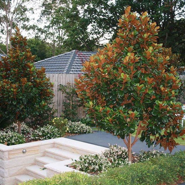 Shade Garden Bed Australia