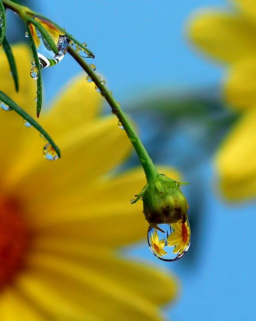 Flower dew - (CC)Steve Wall - www.flickr.com/photos/stevewall/8253350452/in/photostream#