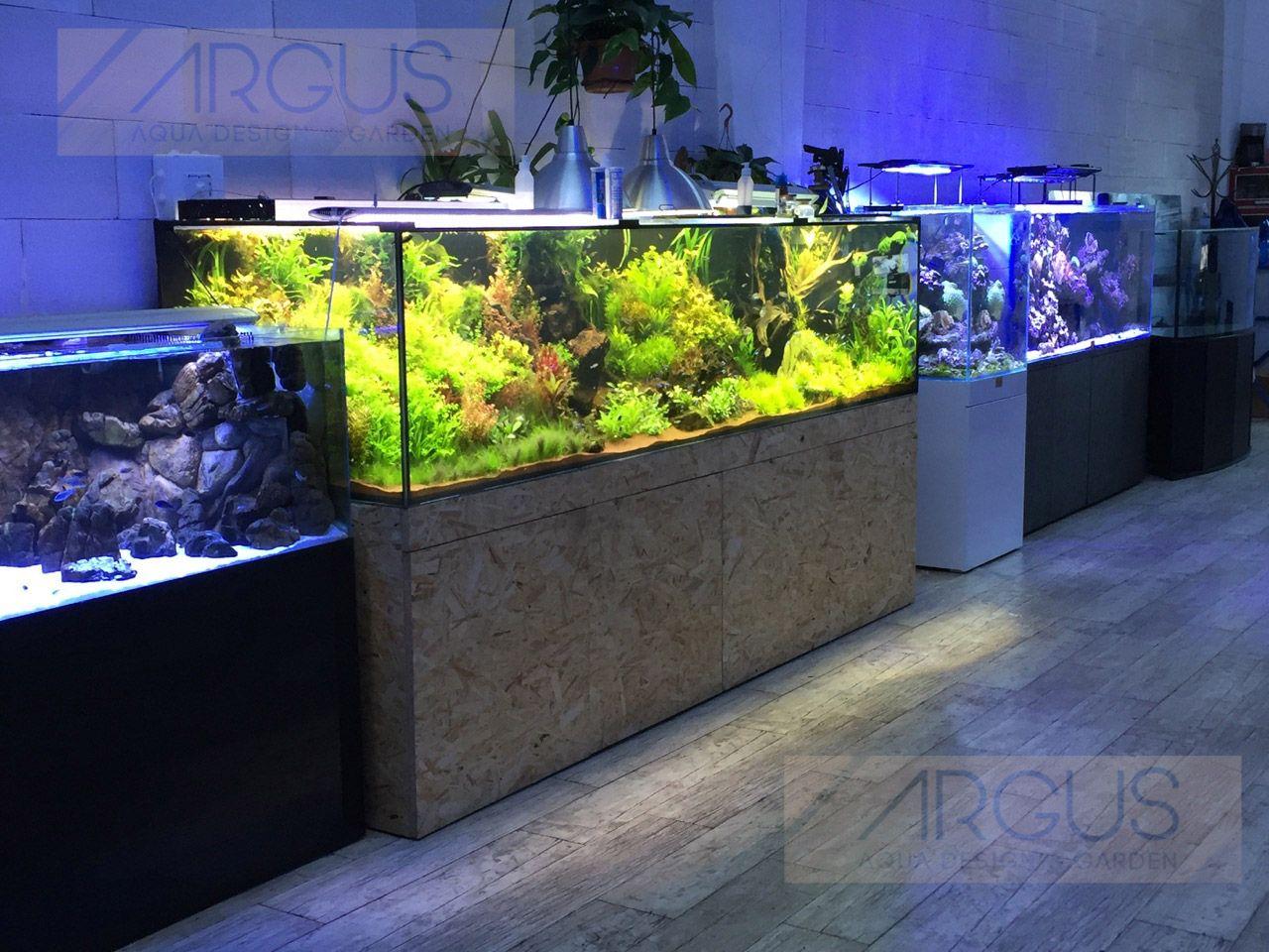 Argus aquarium jakub dymek akwarium roślinne pinterest