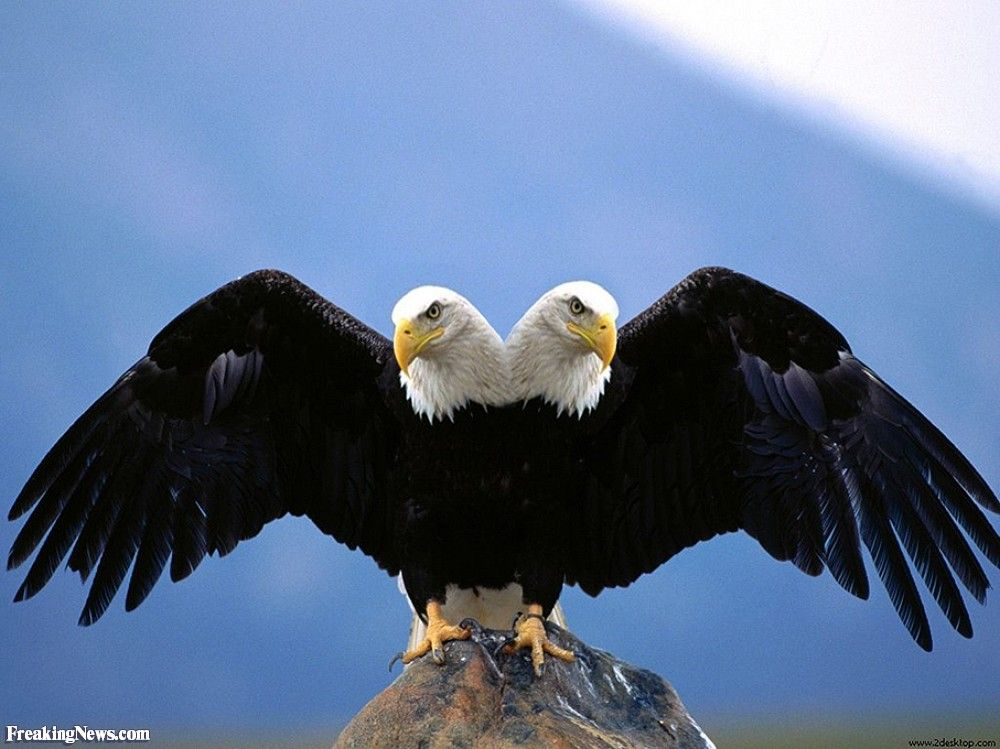 Imperial Two Headed Eagle Pictures