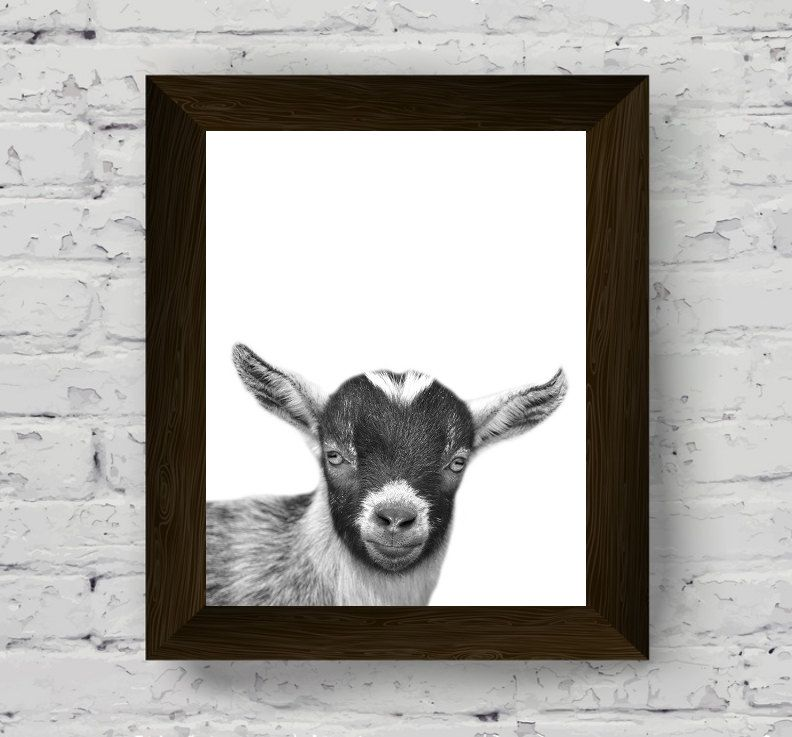 Goat print goat wall art black and white goat black white animal