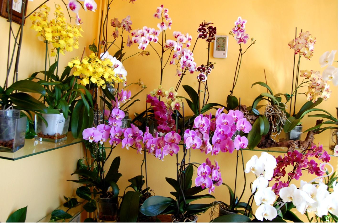 Cuidar las orqu deas en casa jard n pinterest for Jardin 32 neuquen