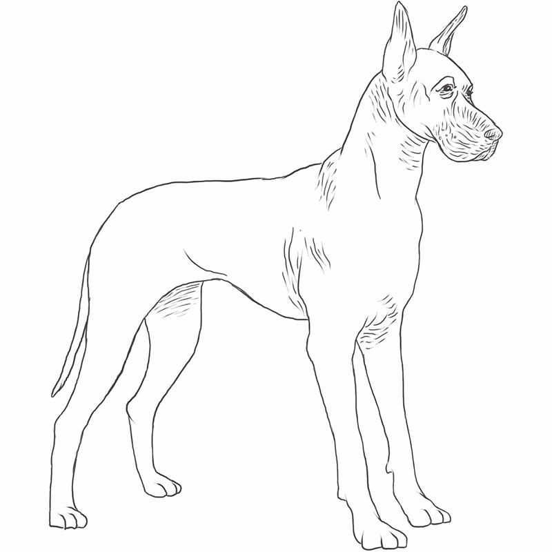 Great Dane Drawing Dog Breeds List Dane Dog Great Dane Dogs Dog Breeds