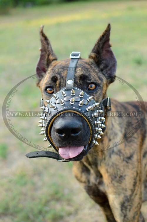 Royal Spiked Anti Barking Leather Dog Muzzle Padded With Nappa
