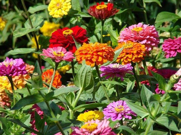 Kwiaty Letnie Profesjonalne Porady I Artykuly Flower Seeds Orchid Seeds Annual Plants