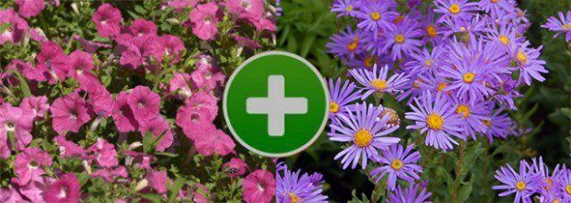 Цветы на клумбе – правильное соседство   Клумбы, Цветы и ...