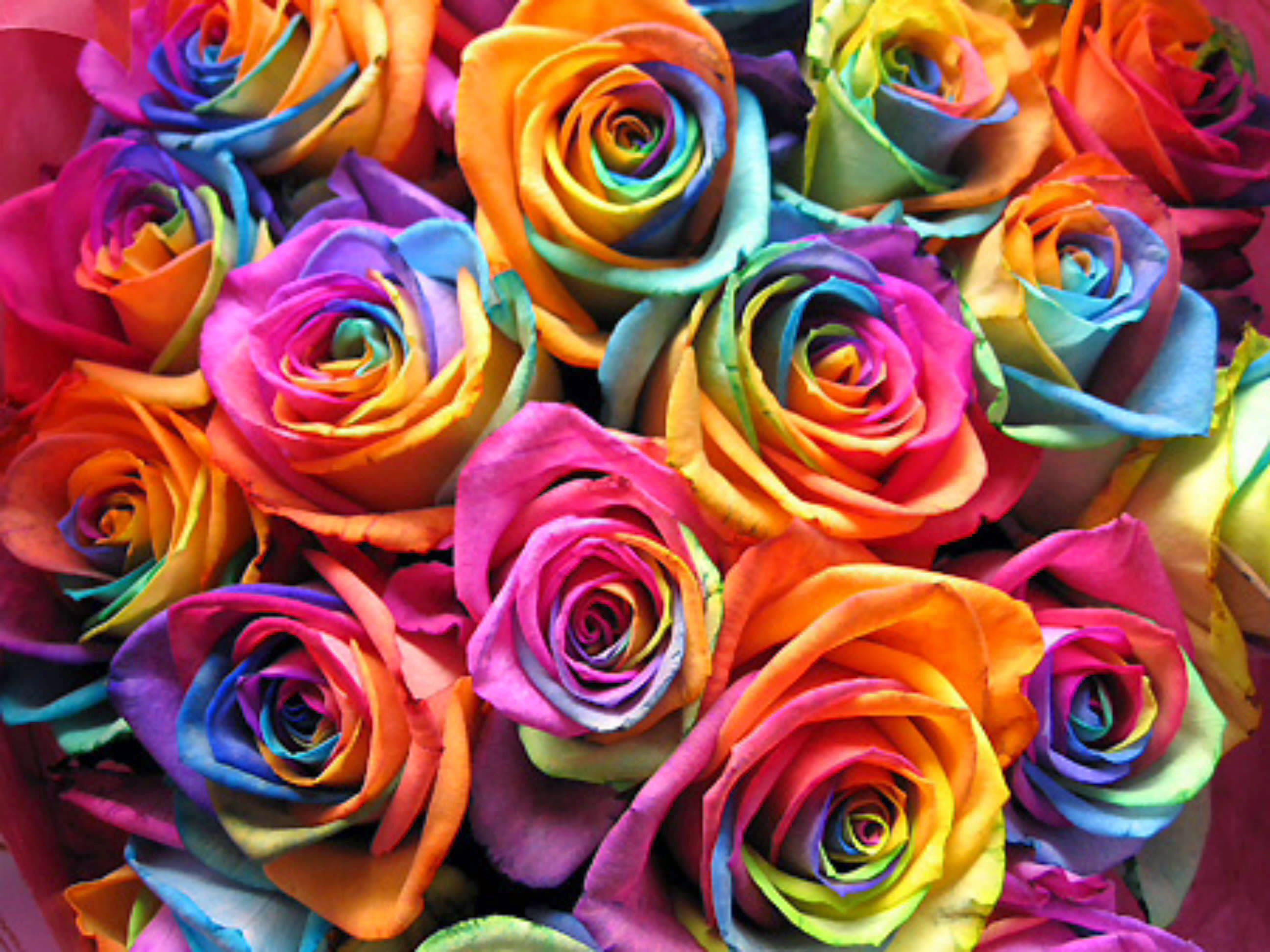 39 best flowers mixed colours images on pinterest colorful