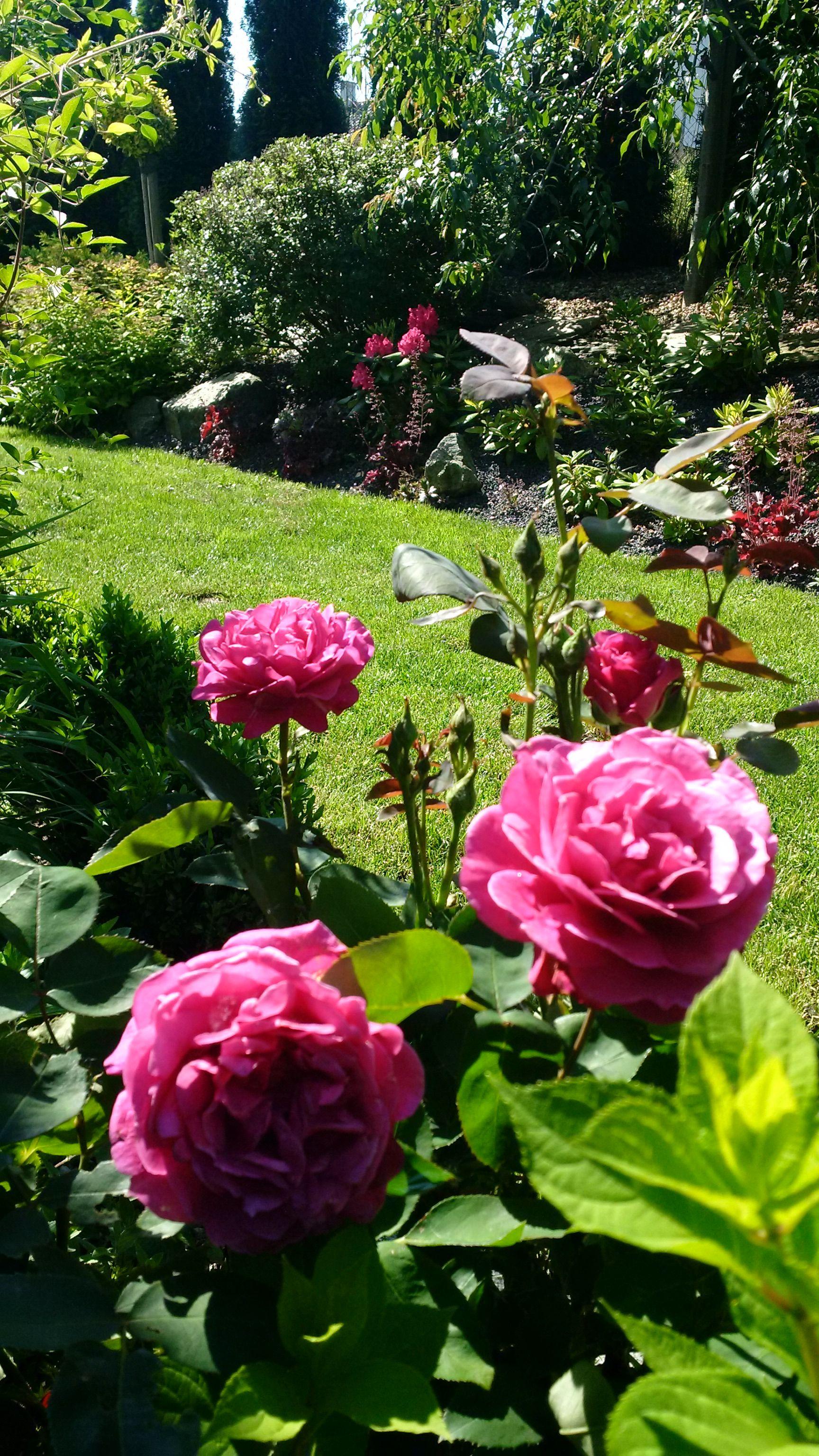 Flower Gardening, Flowers Garden, Gardening Tips, Garden Oasis, Landscaping Ideas,