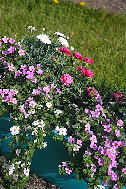 Kompozycje Kwiatowe Ba Balkon Taras I Do Ogrodu Cz 1 Plants