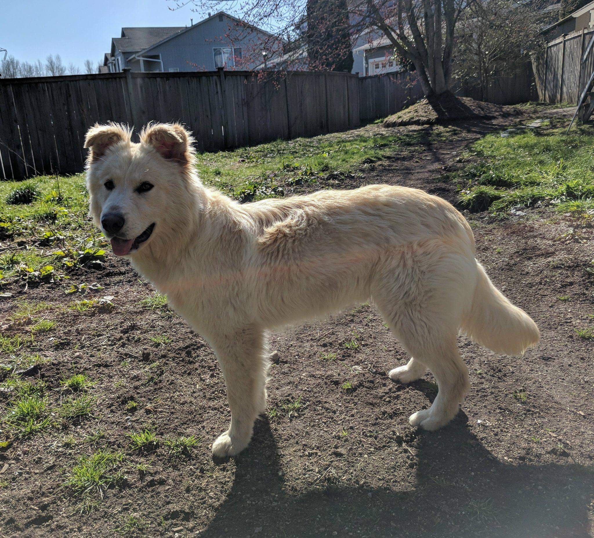 Adopt Teddy On Animals Animal Rescue Dogs