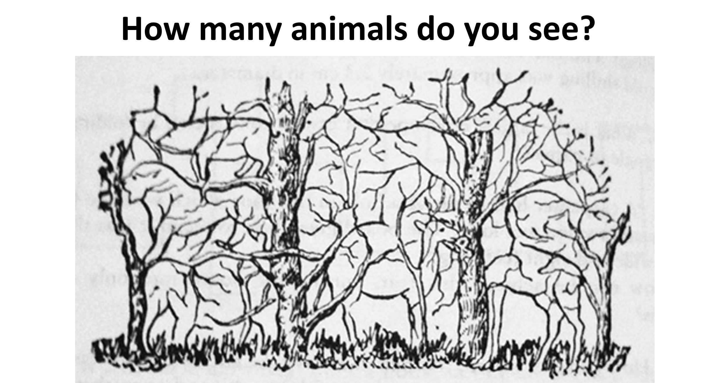 11++ How many animals can you see ideas in 2021