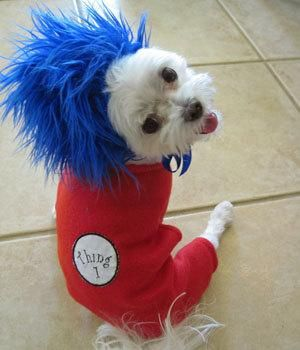 thing 1 thing 2 look alike halloween dog by littledogfashion rex and molly