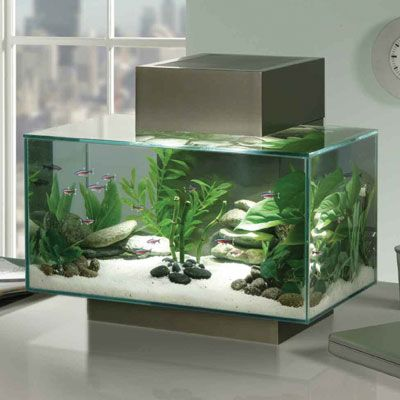 how to set up a fish tank heater