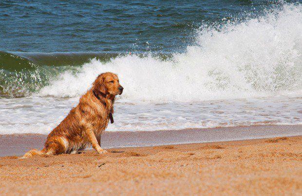 Dog Sunburn Pet360 Pet Parenting Simplified Dog Sunburn Pets Dogs
