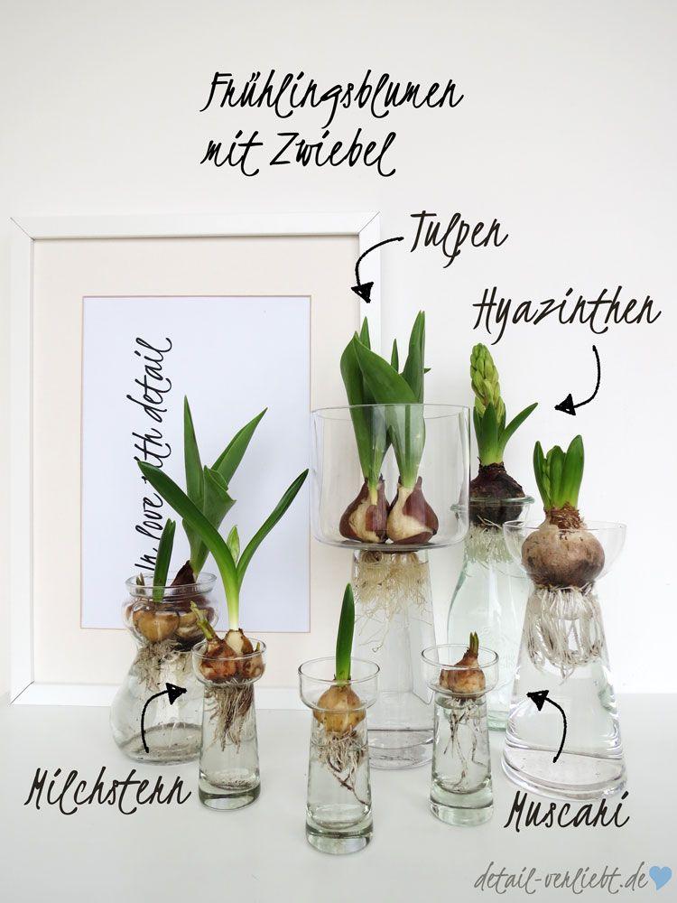 Sukkulenten In Korkstopsel Anlegen Eine Tolle Deko Idee , Frühblüherzwiebeln In Der Vase Diy Mit Blumen