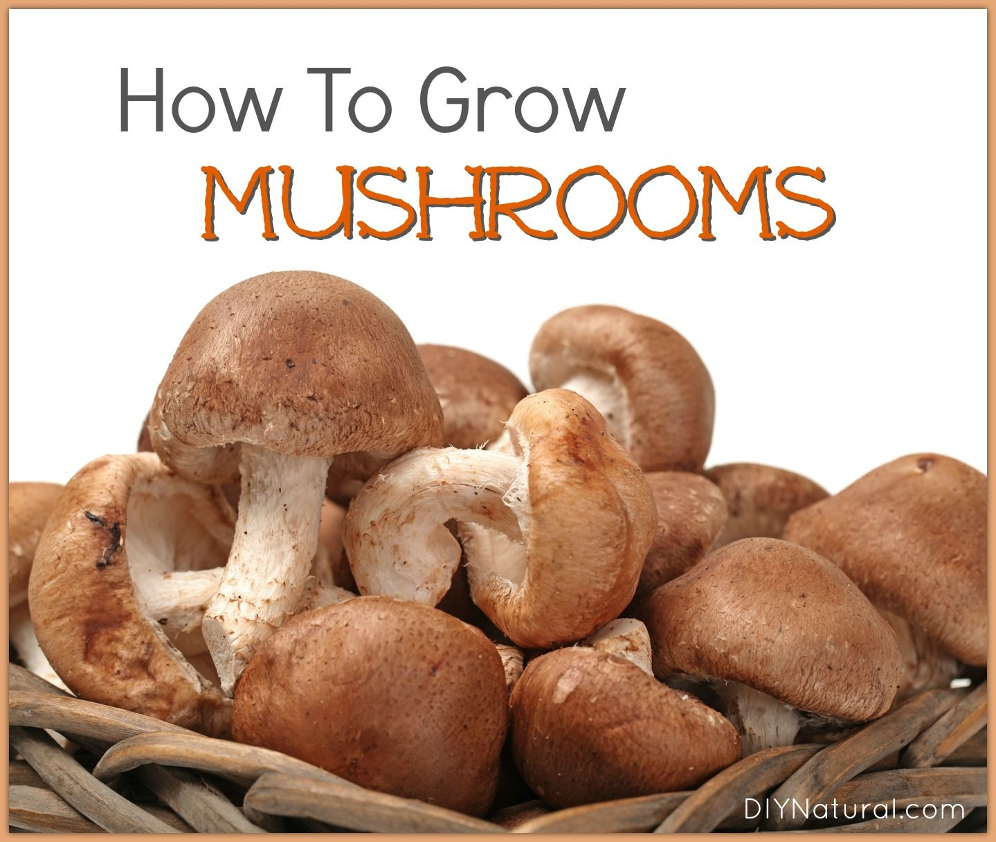 Learn how to grow mushrooms at home, naturally, using