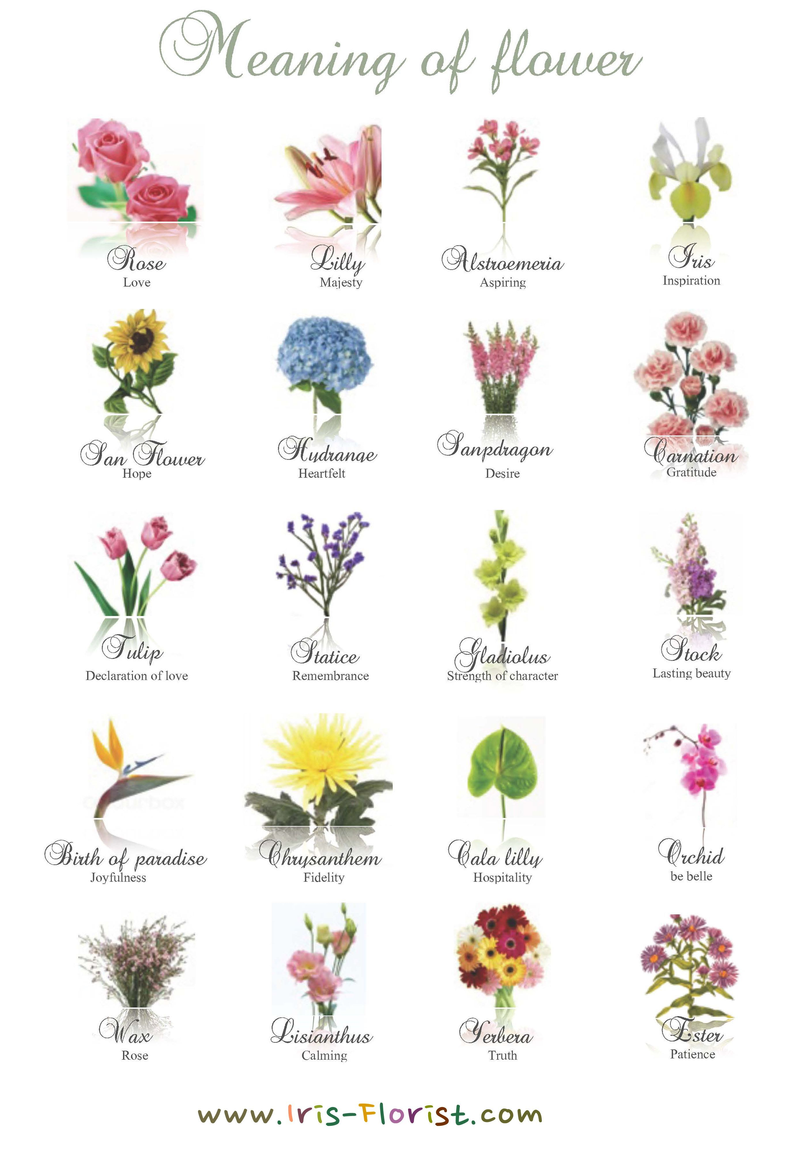 Birth Flowers And Meanings Birth Flowers Birth Month Flowers November Birth Flower
