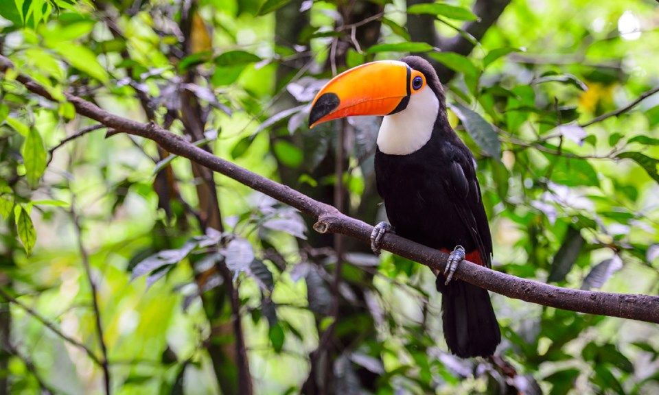Amazon Rainforest 8 Of The Most Incredible Animals Rainforest