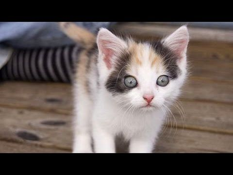 Try Not To Laugh Kitten Pooping Youtube Kittens Cutest Funny Cat Compilation Funny Cat Fails