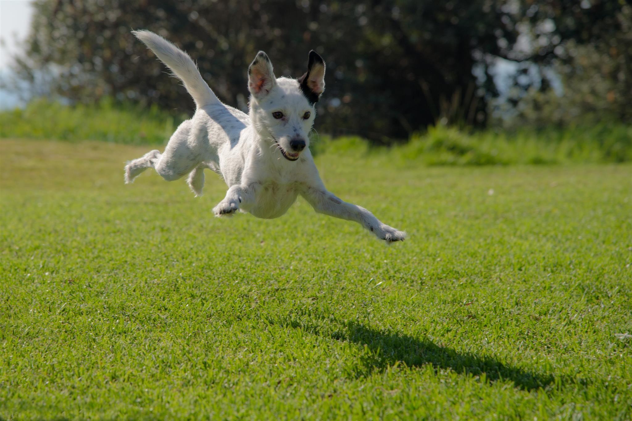 Hey Look I M Flying Dogsofpinterest Dogs Doglover Superdog Dogslover Jumping Dog Eco Friendly House Eco Friendly Soap