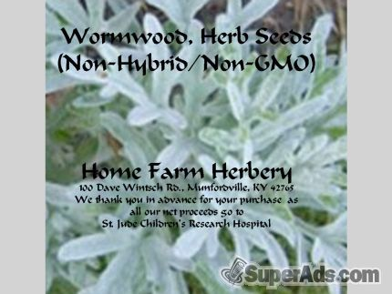 Wormwood, Herb Heirloom Seeds Medicinal, Order now, FREE shipping in New York NY - Free New York SuperAds