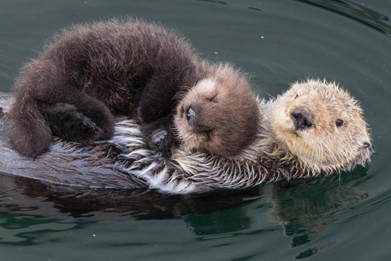seaotter hashtag on Twitter Baby animal nursery art